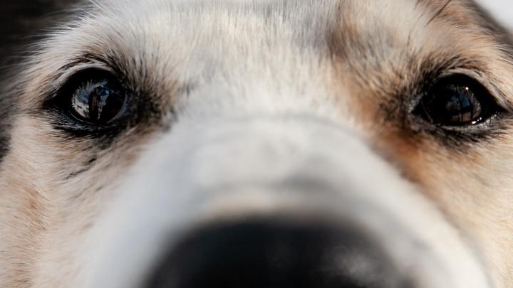 Посмотрите им в глаза: 8 собак из тюменского приюта, пережившие операции и предательство хозяев