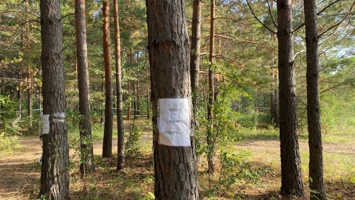 Жители поселка Ушаково объявили массовый протест власти из-за вырубки леса