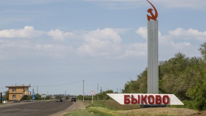 Просто полола огород: в Волгоградской области бешеная куница набросилась на женщину. Введен карантин