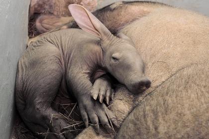 «Загляните в вольеры изнутри»: екатеринбургский зоопарк пробует новый формат посещений