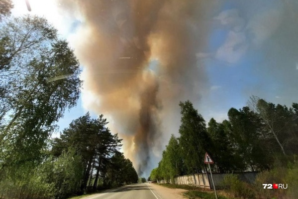 На несколько десятков километров дым от лесного пожара разгулялся по всему Тюменскому району. Специалисты пытаются сдерживать пламя