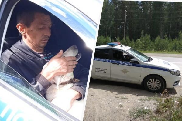 Поймать собаку помогли сотрудники ГИБДД
