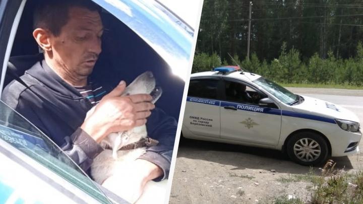 Уральский Хатико: собака несколько дней ждала хозяина на дороге, где его задержали сотрудники ДПС