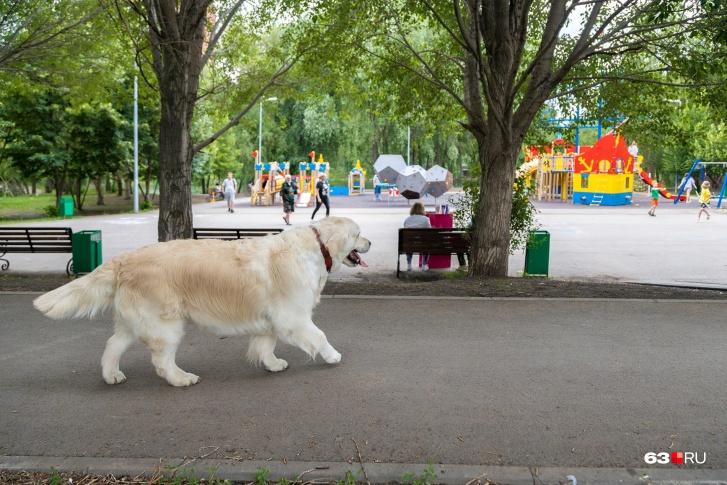 Воспитанный пес будет вести себя прилично даже на детской площадке — так же, как Лиса