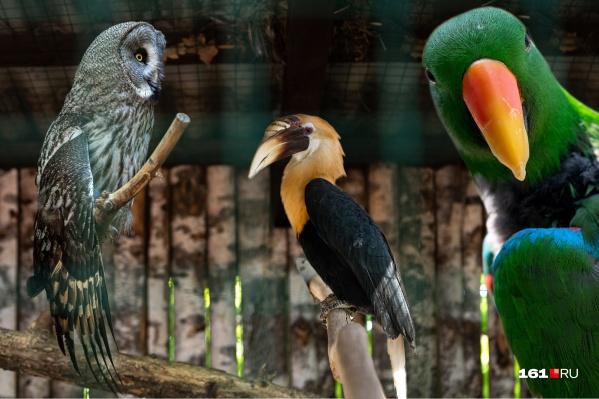 В «Малинках» обитают 1500 видов птиц