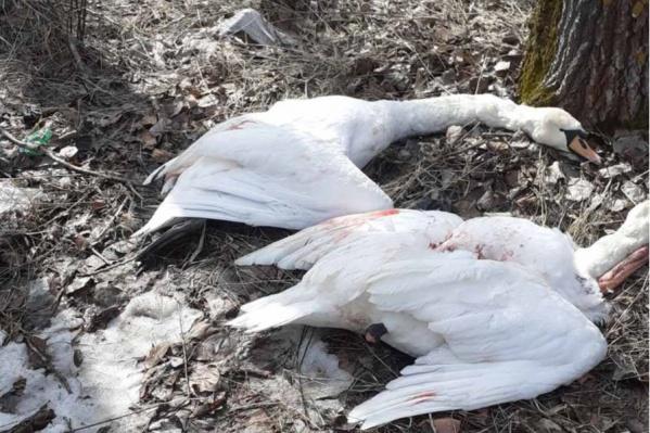 За добычу незаконных трофеев охотникам грозит штраф до полумиллиона рублей