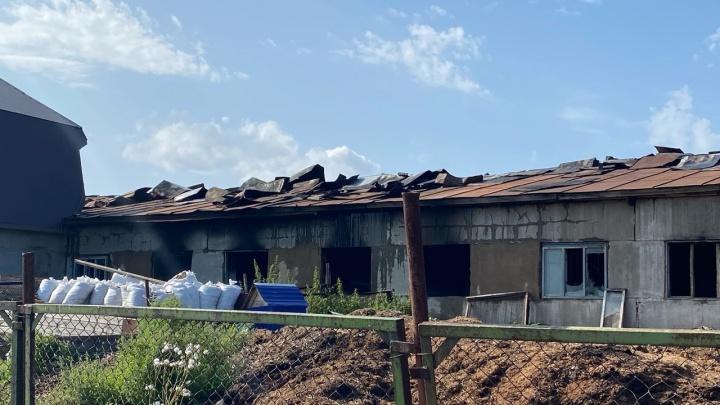 В Прикамье на пожаре в конном клубе погибли лошади
