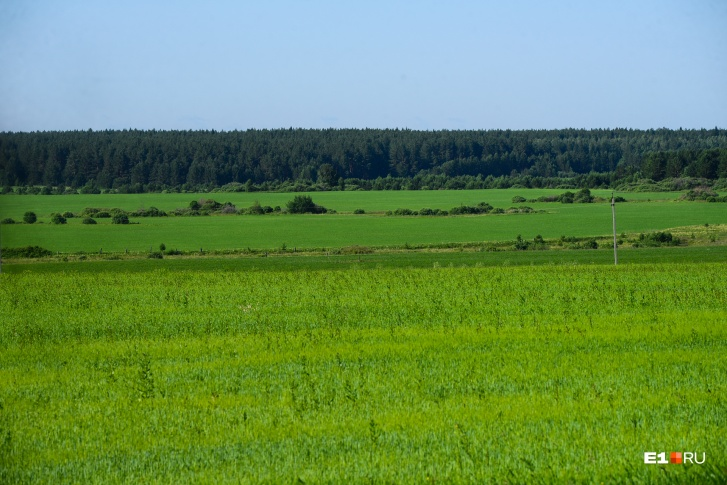 По мнению фермера, у нас реально развивать сельское хозяйство, чтобы сами аграрии получали с этого доход. Есть просторы: земля, пашни