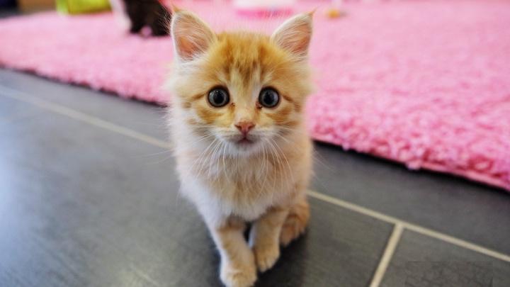 В Перми открывается социальная ветклиника — там будут бесплатно лечить бездомных животных