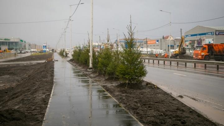 «Модное словечко для оправдания бюджетных статей»: общественник — о программе озеленения Красноярска