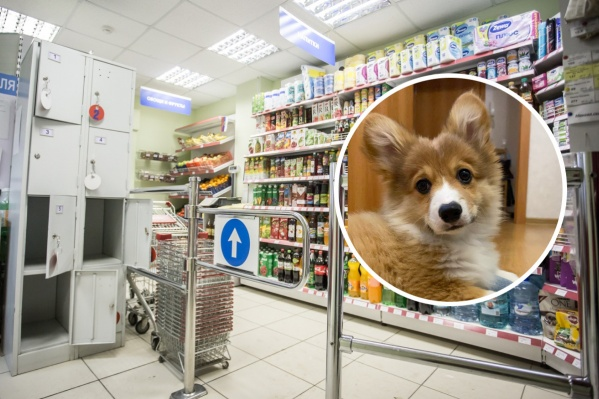 Как вы относитесь к людям, которые приходят в магазин вместе со своими домашними животными? Давайте обсудим в комментариях!