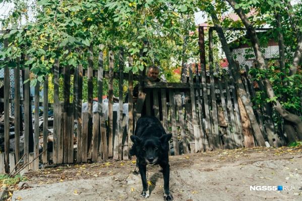 Пес Черныш хоть и бездомный, но охраняет участок. За это получает от хозяйки свою порцию харчей