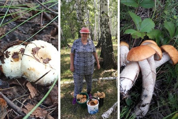 После долгой засухи грибы наконец-то пошли