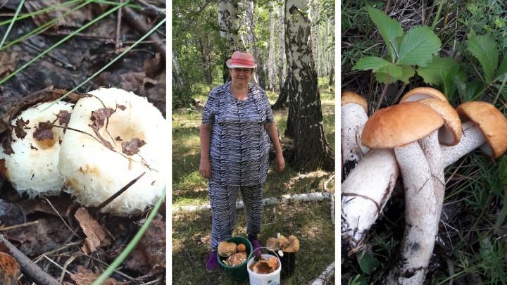 Грибной бум начался в лесах Челябинской области. Смотрим фото