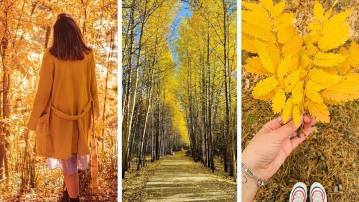 Золотая Югра: подборка красочных фото с осенних улиц Сургута