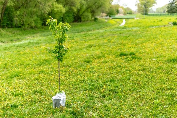 """Забег Зелёного Марафона пройдет <nobr class=""""_"""">5 июня</nobr> — во Всемирный день окружающей среды"""