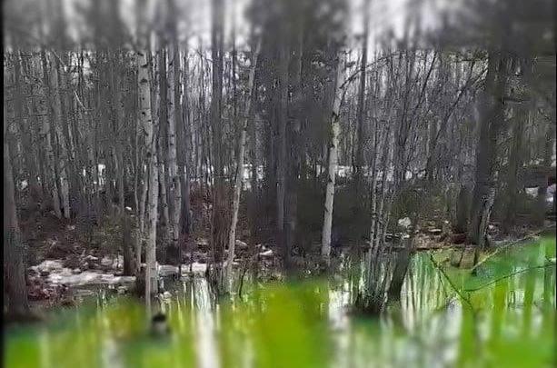 Не знаем, есть ли тут наши трубы: коммунальщики прокомментировали находку ядовито-зеленого из-за красителя озера