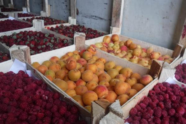 В августе в Сургуте выявили 250 тонн незаконно привезенных в город овощей и фруктов