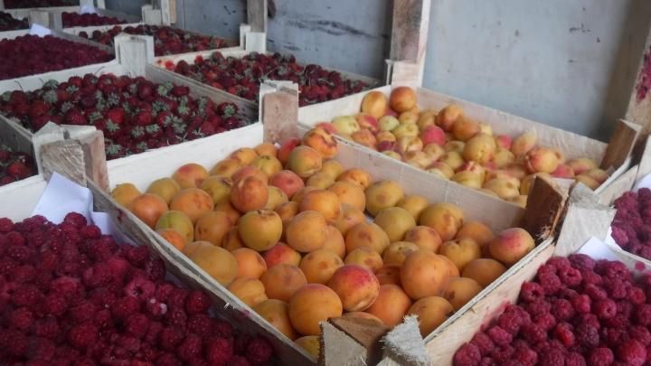 В Сургуте нашли 250 тонн незаконно привезенных в город овощей и фруктов
