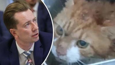 Депутат Госдумы РФ высказался о жестоком убийстве кота в Северодвинске