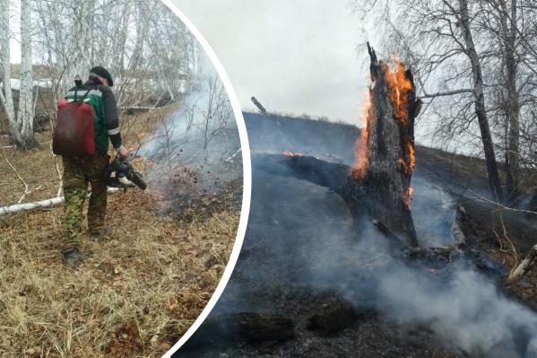 Леса в этом году начали гореть рано
