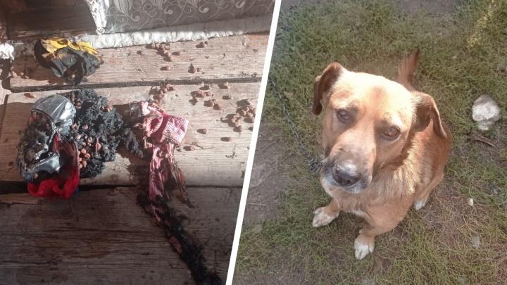 «Убили куриц, пытались сжечь собаку»: в Челябинской области дети разгромили соседский дом