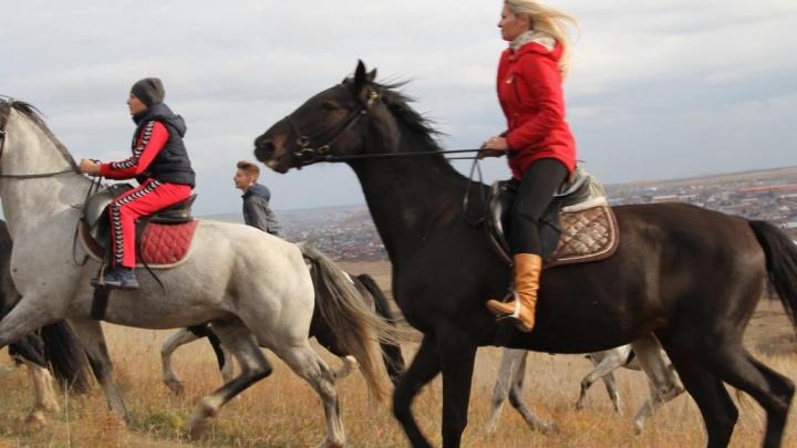Пора валить из города: седлаем коней и любуемся красноярской природой