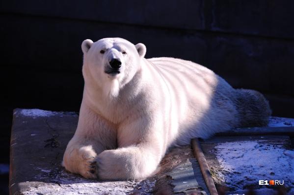 Умка 25 лет радовал собой посетителей зоопарка