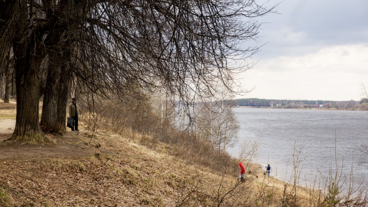 «Это неприемлемо и незаконно»: в Ярославле в Павловской роще построят автомобильную парковку