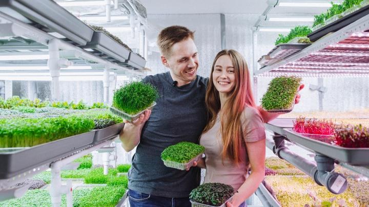 Что такое микрозелень и с чем ее едят?