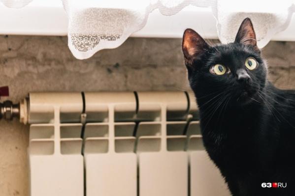 Котик как бы спрашивает: «А есть ли в вашем доме регуляторы тепла?»