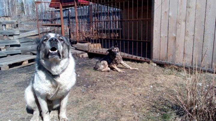 Приют для бездомных собак в Кургане может появиться уже в этом году