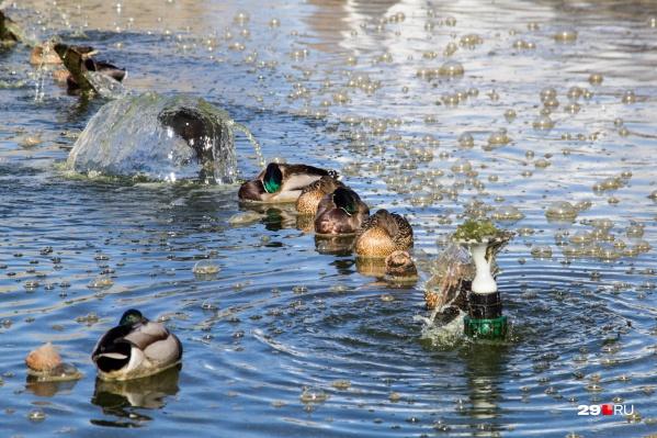 В Сургуте под угрозой обитание пернатых в акватории реки