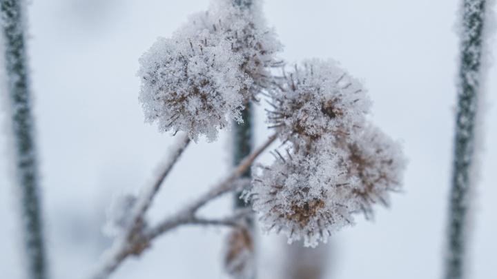Синоптики рассказали о погоде на праздничные выходные в Прикамье