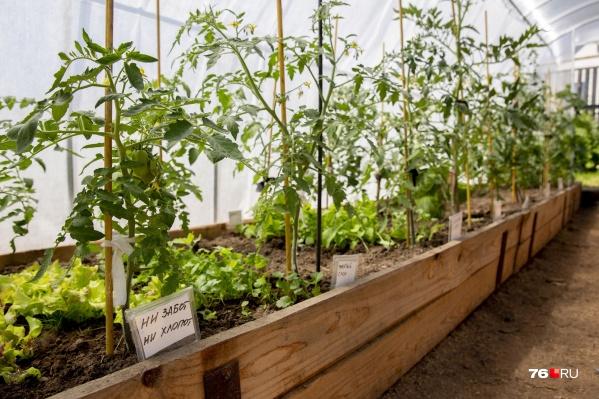 В этом году большой спрос на готовую рассаду