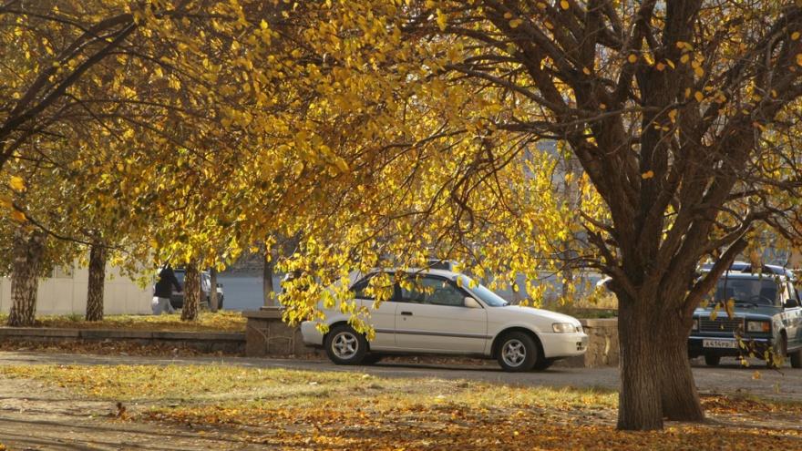 В Курганской области продлили предупреждение о заморозках