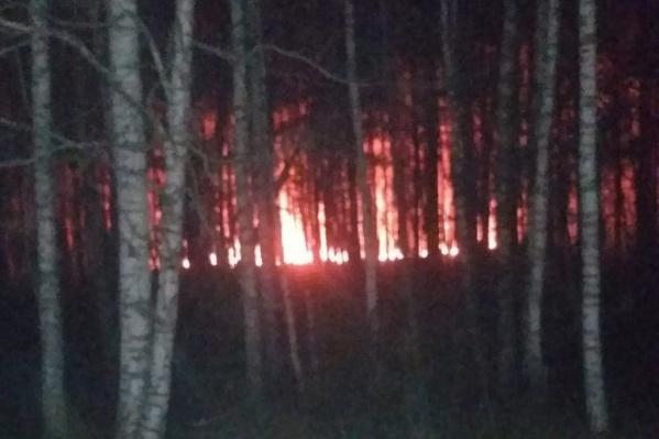 Огонь распространяется в окрестностях Тараскуля вдоль дорог из-за сильных порывов ветра