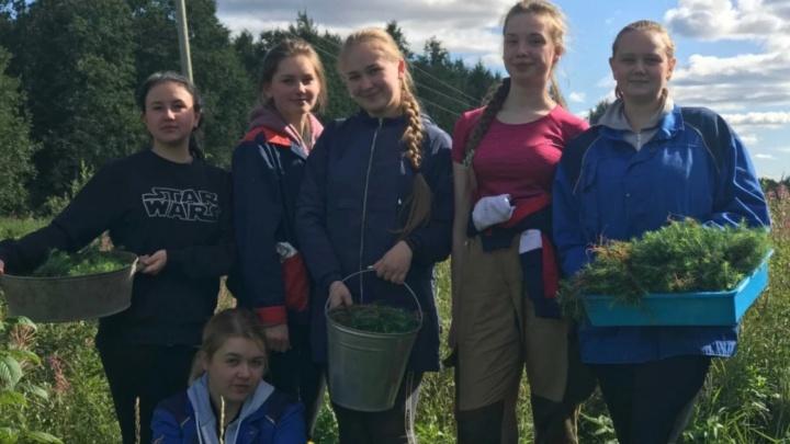 «Зеленый проект года»: школьники-волонтеры из маленького поселка на Севере стали лучшими в стране