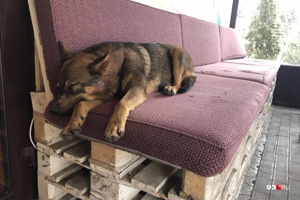 Бездомные собаки живут в разных частях города