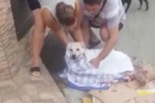 В Сочи мужчина до смерти избил собаку Дашу, которую до этого сбила машина