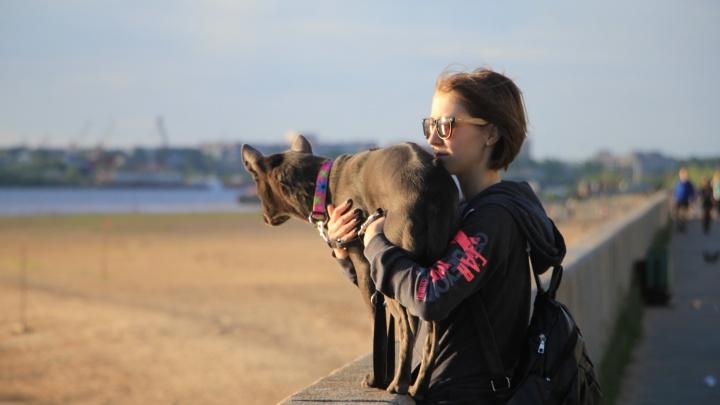 «Отпускать с поводка негде»: почему в Архангельске нет площадок и специальных урн для выгула собак