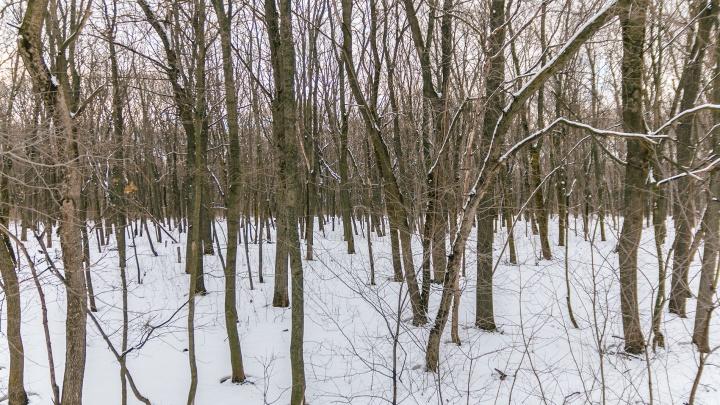 Компания Алексея Ушамирского выиграла у властей суд за охотничьи угодья