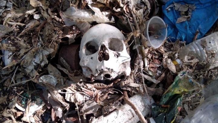 В логу реки Тюменки нашли кости двух людей — они были завалены мусором