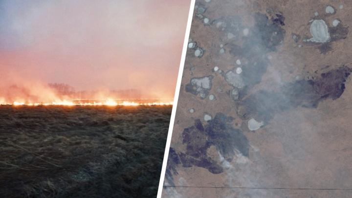 Гринпис не верит официальным данным о площадях лесных пожаров в Тюменской области