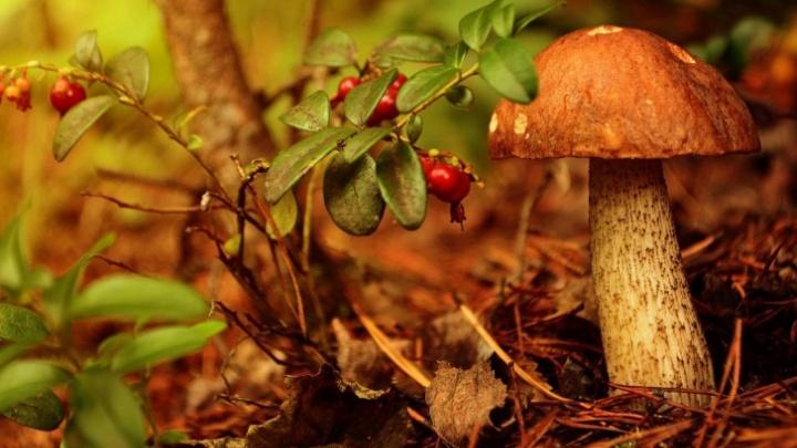 Наткнуться на опята в лесу — счастье. Эксперт ответил, когда в Свердловской области пойдут грибы