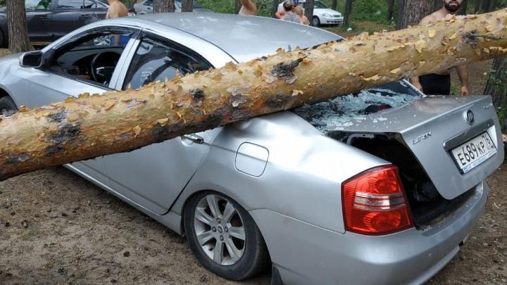 На Прусовских карьерах отказались от ответственности за упавшие на авто деревья: «Вы же в лес приехали»