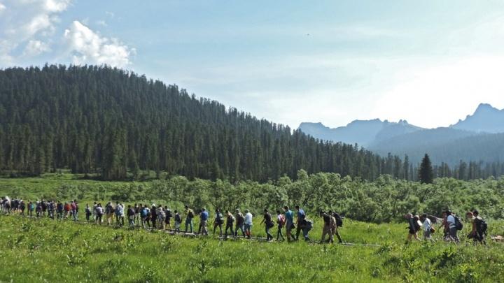 На организатора тура в «Ергаках» возбудили дело из-за нападения медведя