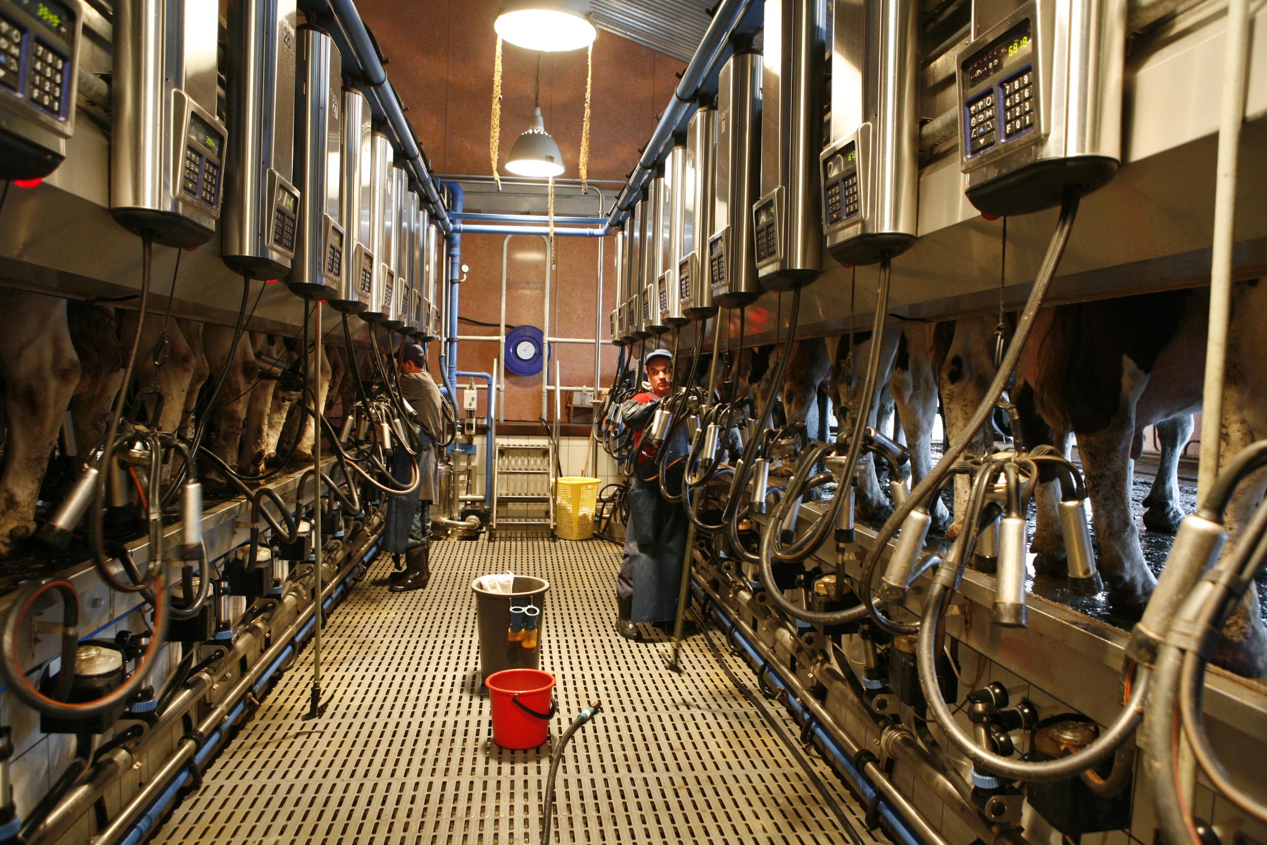 """Сегодня коровы «Ирмени» дают по <nobr class=""""_"""">12 277 кг</nobr> молока в год (на фото — доильный зал)"""