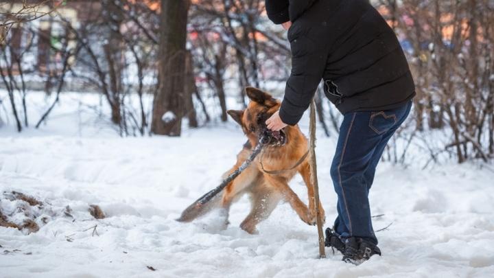 В Курганской области могут ввести штрафы за выгул собак в неположенных местах