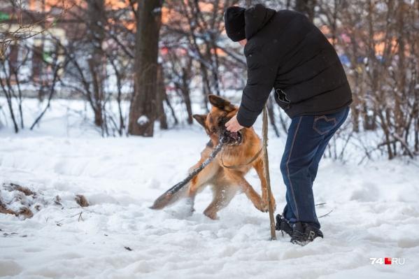 Минприроды разработало федеральный законопроект, в котором содержатся наказания для любителей выгула собак в общественных местах